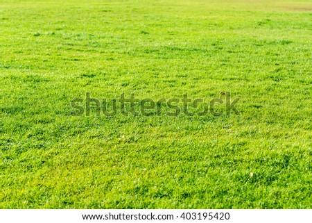 Green grass seamless texture - stock photo