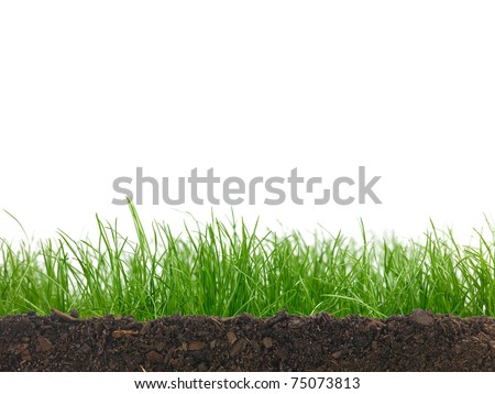 Green grass siolated against a white background - stock photo