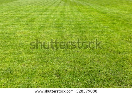 Green grass soccer field background texture in a beautiful summer day