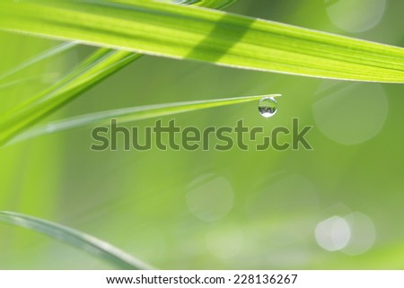 Green grass straws with droplet of dew