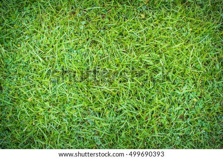 Green grass surface with vignette