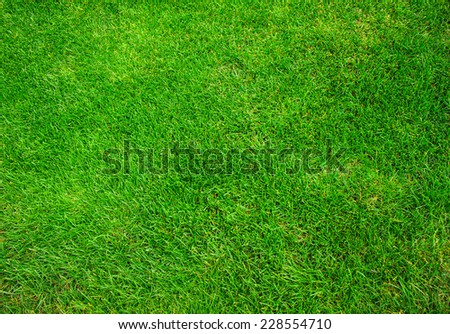 Green grass texture as a background - stock photo