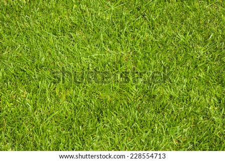 Green grass texture as a background