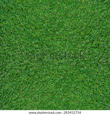 Green grass texture background  - stock photo