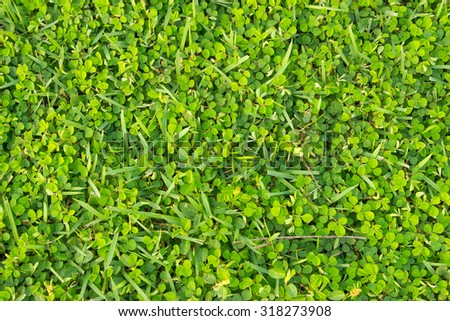 Green grass texture from a field, Green football field grass,Green lawn for background - stock photo