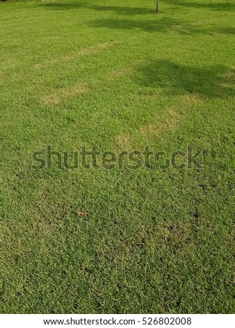 Green grass texture pattern background