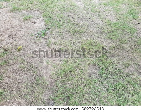 green grass texture used as background