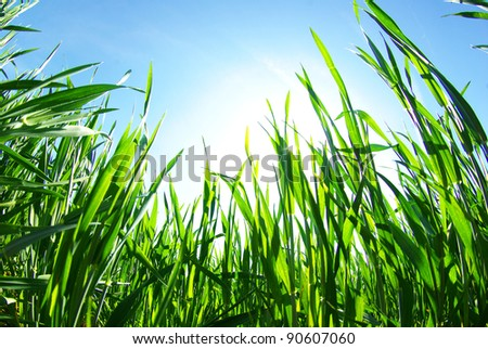 Green grass the blue sky - stock photo