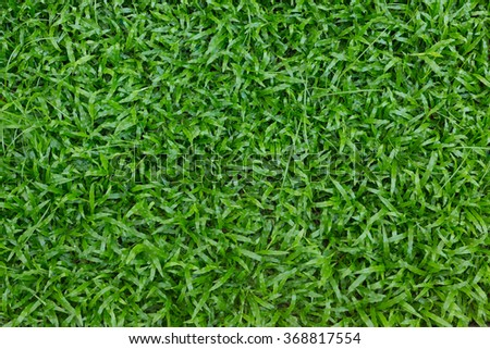 green grass turf in garden, natural eco background - stock photo