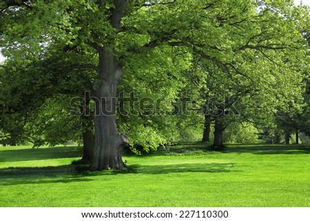 Green grass under Big tree - stock photo