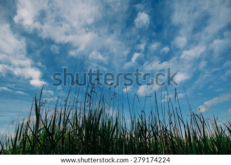 Green grass under blue sky background - stock photo