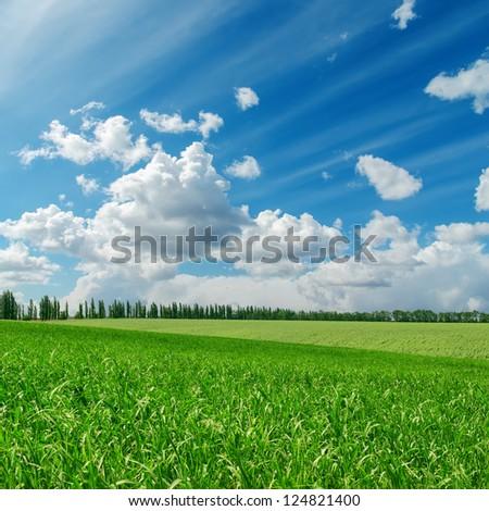 green grass under cloudy blue sky - stock photo