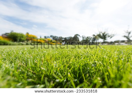green grass - view form the grass in the park - stock photo