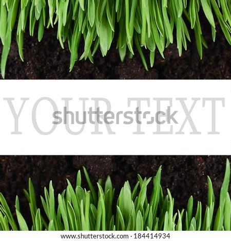 Green grass with a ground close up - stock photo