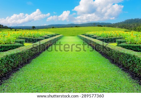 Green grass with a sunflower on a pathway. - stock photo