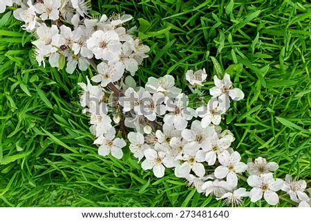 Green grass with blooming apple tree branch - stock photo