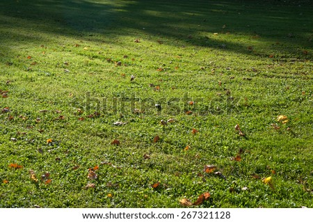Green grass with brown autumn leaves - stock photo