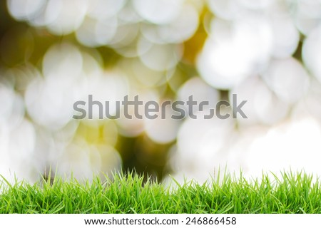 green grass with defocus background