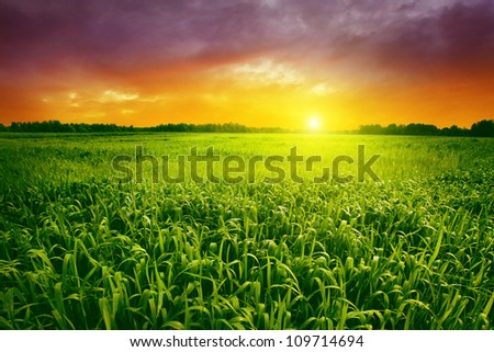 Green grass with dew and beautiful sunset. - stock photo