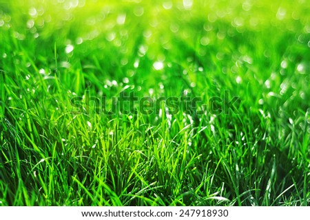 green grass with dew and bokeh with negative space