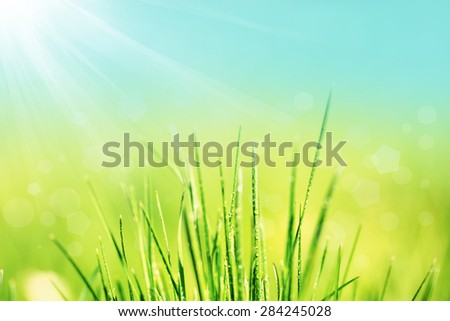 Green grass with dew, close up - stock photo