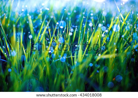green grass with dew drops and blue bokeh. Morning dew on grass. blurred background - stock photo