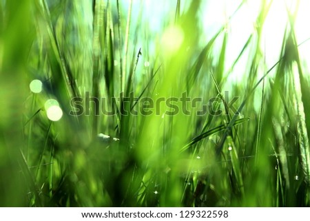 Green grass with dew in the morning - stock photo