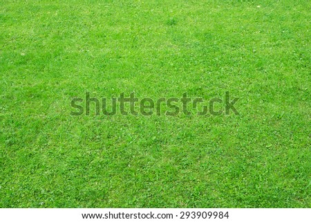 Green grass with different plants, nature background. Close-up view - stock photo