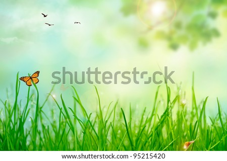 Green grass with drops and lights,idyllic field with butterfly,snail and birds - stock photo