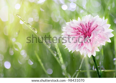 Green grass with drops of dew - stock photo