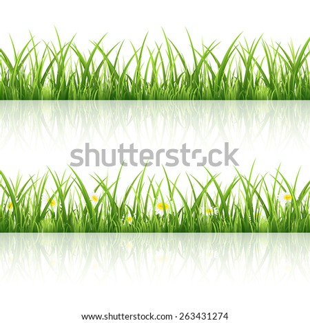 Green grass with flowers isolated on white background, illustration. - stock photo