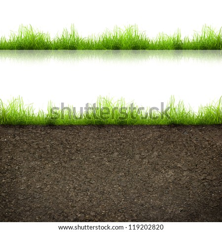 green grass with in soil isolated on white background - stock photo
