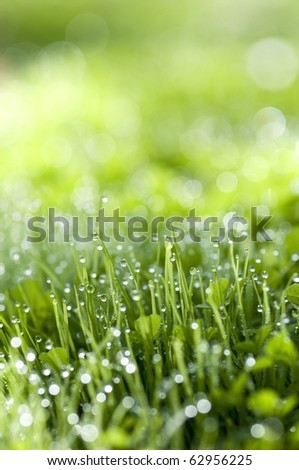 Green grass with morning dew - stock photo