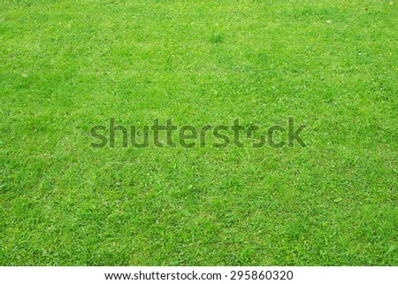 Green grass with plants, nature background. Close-up view - stock photo