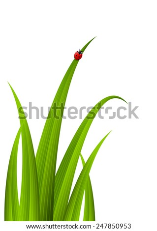 Green grass with red ladybug