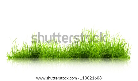 green grass with reflection isolated on white background - stock photo