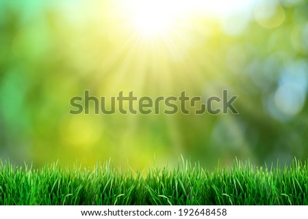 Green grass with sunset views. Blurred background. - stock photo