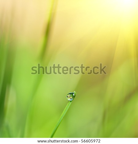 green grass with water drop and sun light - stock photo