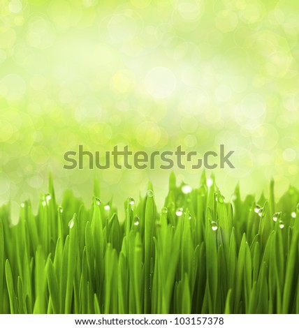 Green Grass with Water Drops on Abstract Bokeh Background - stock photo