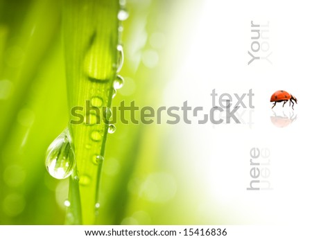 Green grass with water drops on it - stock photo