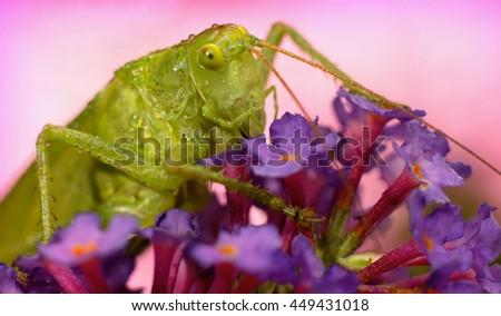 green grasshopper in the garden - stock photo