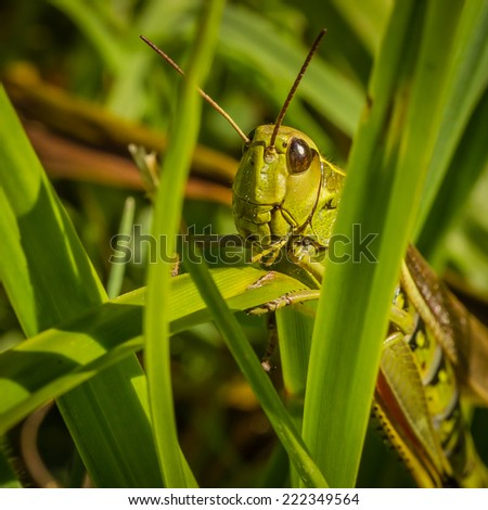 Green Grasshopper Sitting on Grass - stock photo