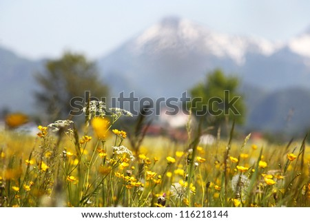 Green grassland  and mountains in bavaria - stock photo