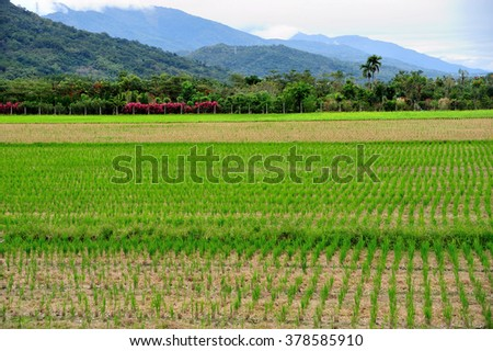 Green grassland in Taiwan countryside - stock photo