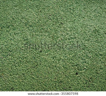 Green gravel background - stock photo