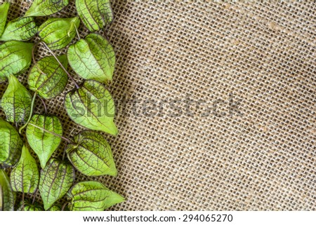 green ground cherry on sackcloth