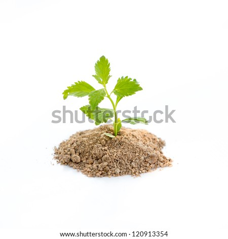 Green growth plant, isolated on white background - stock photo