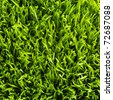 Green healthy  grass texture - stock photo