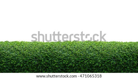 Green hedge fence on white background with copy space