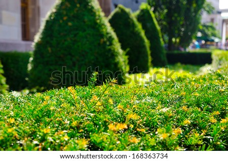green hedge in a small town - stock photo